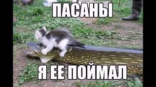 Приколы на рыбалке с участием животных слайд-шоу