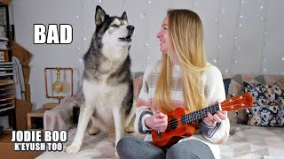 My Husky Critiques My Ukulele Playing! Nearly FALLS Off The Chair!