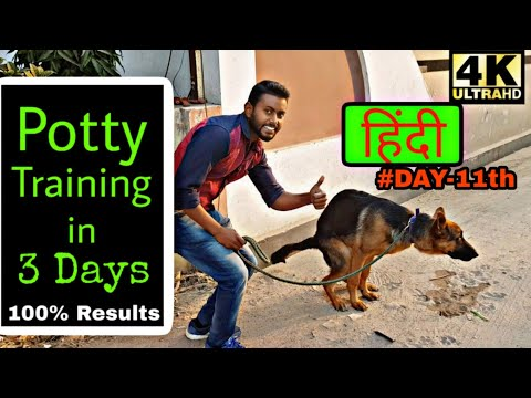 Easy way to Potty Train your Puppy or Dog in (HINDI) 4K || Smart Dog Training