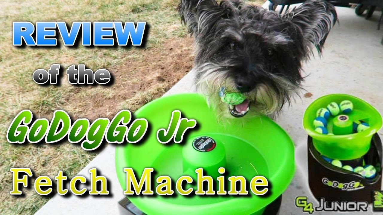 review of the godoggo jr automatic fetch machine youtube