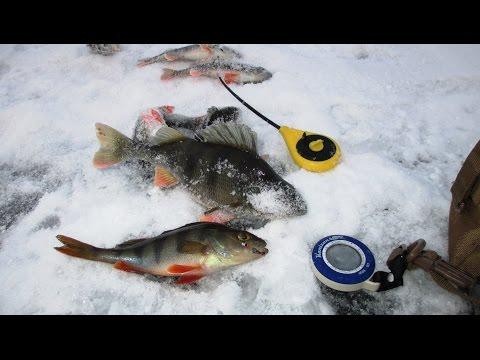 ловля красноперки зимой на безмотылку