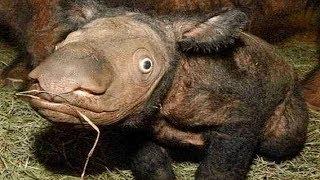 10 De Los Animales Más Raros Y Únicos Del Mundo