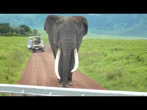 Elephant in the Ngorongoro Crater: Part III (best)