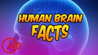 60 Seconds of The Human Brain FACTS