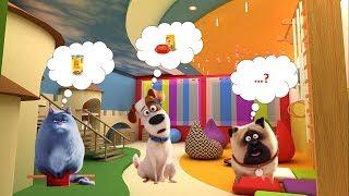ТАЙНАЯ ЖИЗНЬ ДОМАШНИХ ЖИВОТНЫХ 2 | Игра для детей | 2019 HD | Развивающие мультфильмы для детей!