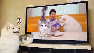 Dog And Cat Watching Themselves On TV