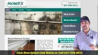 Mold Removal Toronto - Call 647-496-5842 - Your #1 Trusted Mould Removal Company In Toronto