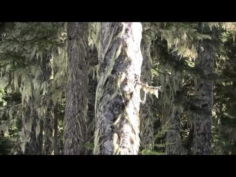 Лишайники на деревьях. Как от них избавиться и надо ли