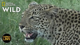 Safari Live - Day 321 | Nat Geo WILD