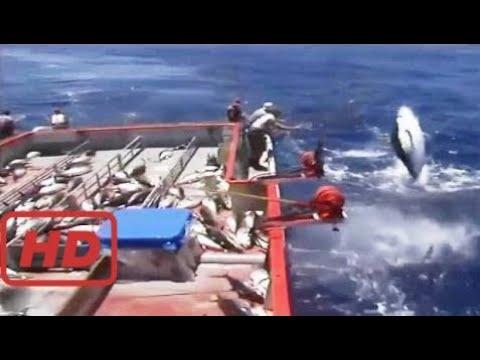 釣鮪魚!! 2017