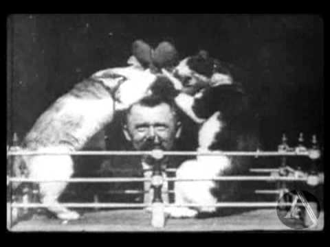The Boxing Cats (Professor Welton's)