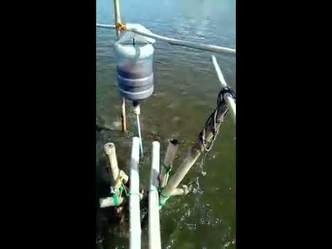 Milkfish (Bangus) Feeder Device
