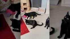 Kölner Katzen suchen ein Zuhause