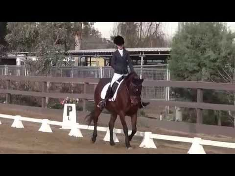 EC Quite A Miracle & Kaitlyn Herman - Intro Test B - PGF Dressage Schooling Show January 2015