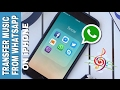 How to transfer music 🎶 files on WHATSAPP from iPHONE Mp3