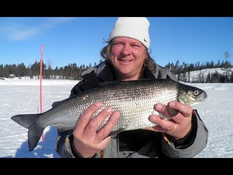 зимняя рыбалка видео - 2015-05-30 18:57:51