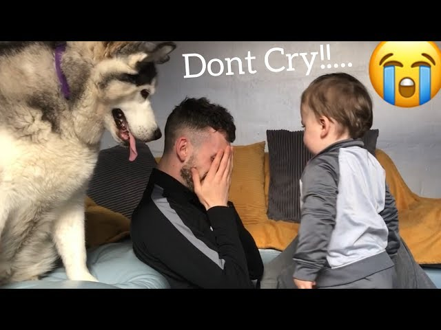 Husky V Baby Reaction to Dad Crying Prank!!.. [CUTEST THING EVER]