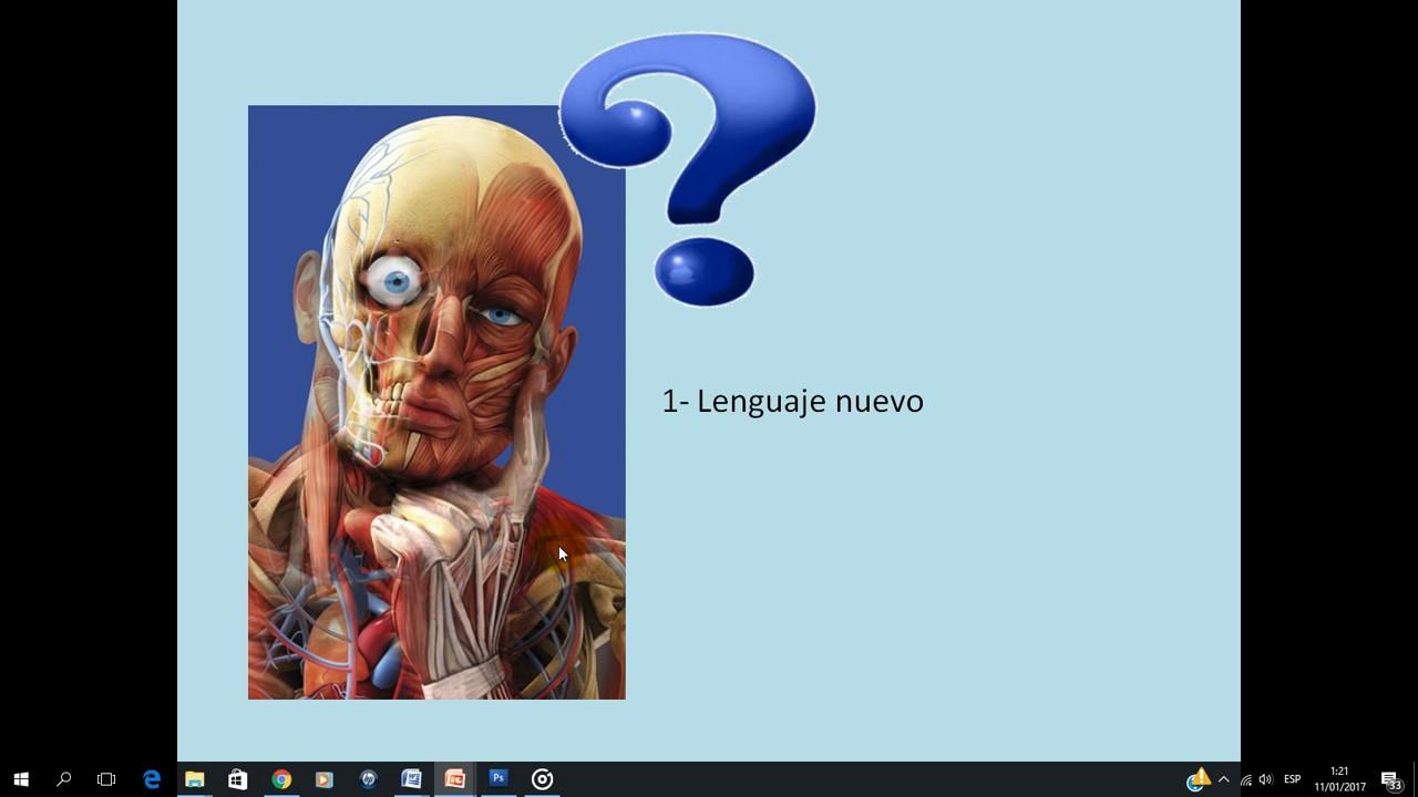 Curso introducción a la anatomía pptx - YouTube