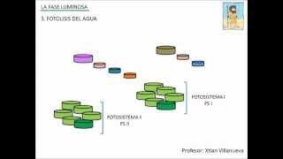 Fotosíntesis I (Fase Luminosa)