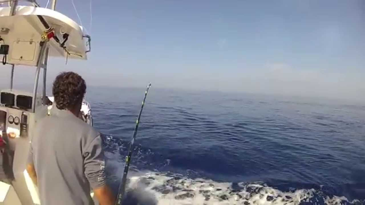 bianco Marlin hook up