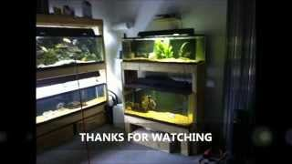 Building A Fish Tank Rack, Starting A Fish Room Part 2