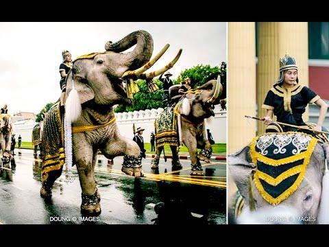 ซาบซึ้งงงง..!! ช้างงางาม 11 เชือก ชูงวงร้องกึกก้องแสดงความอาลัยในหลวง..