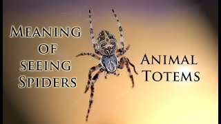The Meaning of Seeing Spiders: Animal Totems and More!