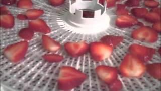 Dehydrating Strawberries
