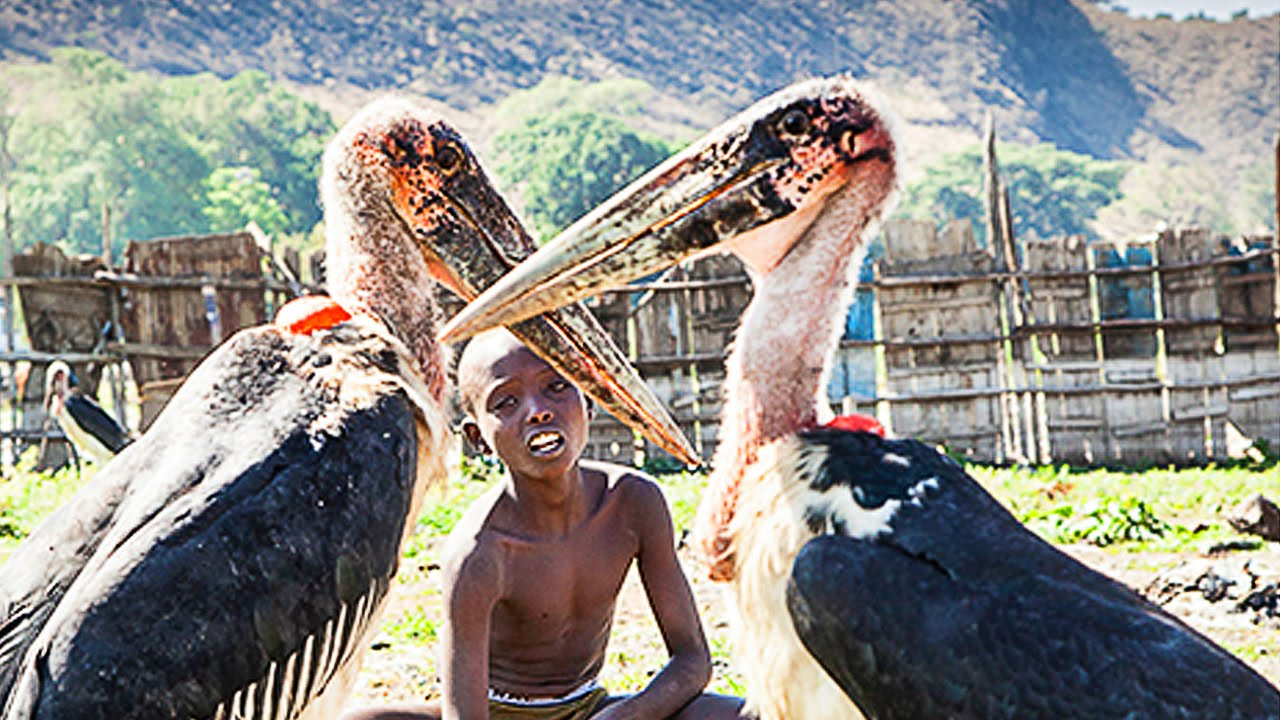 Lake Awasa, Ethiopia  Documentary