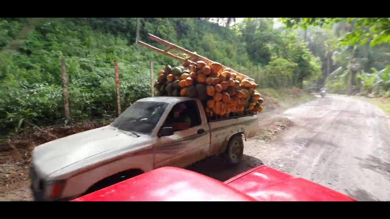 Asi Transportan Cocos En Guatemala