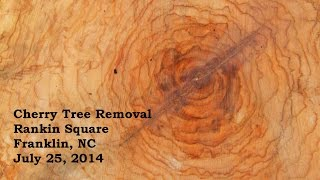 Cherry Tree Removal in Rankin Square (Time Lapse)
