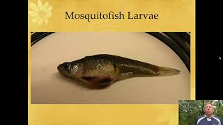 Ichthyology Lecture 26 - KY Families - Livebearers