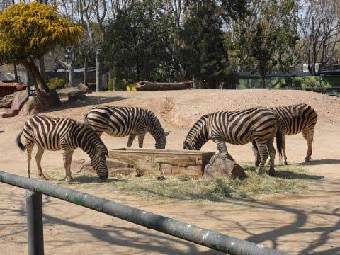 Barcelona (Zoo in Barcelona)[Deutsch/German]