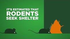 Rodent Awareness Week 2018