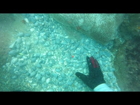90lbm Of Lead (fishing Weights) In 1 Dive At Jupiter FL Inlet Fishing Point