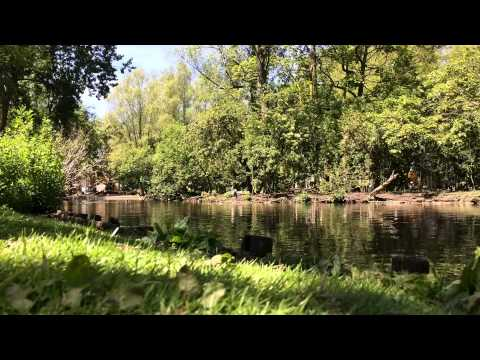 Europe, The Netherlands, Amsterdam, Oosterpark - ducks  videoscape / 25th of May 2015