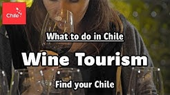 What to do in Chile: Wine Tourism - Find your Chile