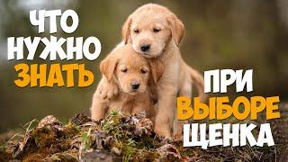 покупаем щенка! Что нужно знать при покупке собаки!