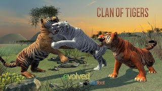Clan of Tigers Android Gameplay 1080p