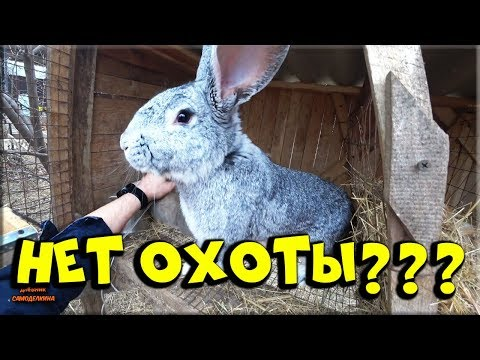 🐰 Случка кроликов без охоты! Наш опыт.... 😪