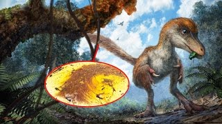 Scientists discover a 99-million-year-old dinosaur tail with feathers
