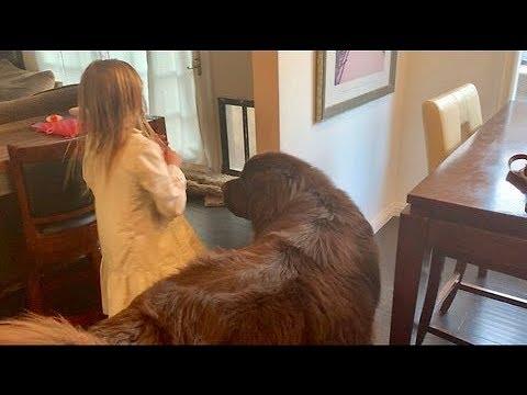 "Sidekick dog makes ""grandest"" entrance ever"