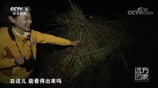 [远方的家]行走青山绿水间 大美鄱湖 候鸟家园| CCTV中文国际