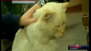 Следователь рассказал подробности спасения кота Васьки