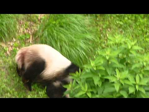 River Rock School Panda Sighting at National Zoo June 2013