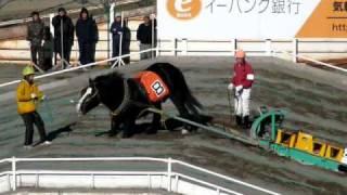 ばんえい競馬、競走中止後の一部始終。 thumbnail