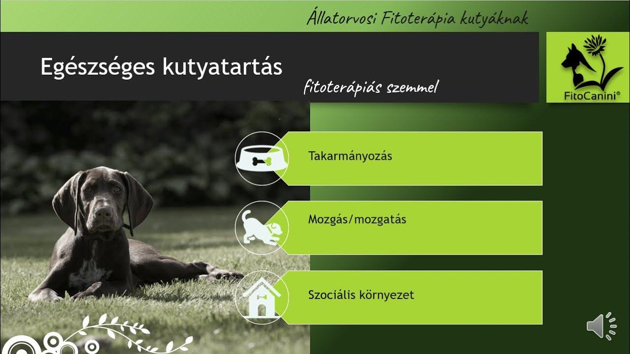 Egészséges kutyatartás fitoterápiás szemmel - FitoCanini®