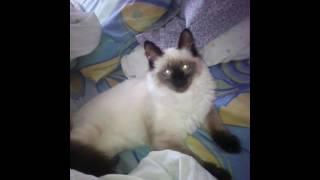 Мой коте
