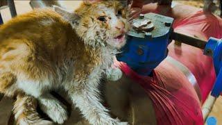 전기실에서 목이 터져라 울어대는 새끼고양이를 구조했습니…