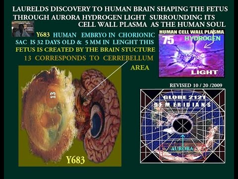 THE HUMAN BRAIN SHAPING OF THE FETUS DISCOVERY&THE MAGNETIC BALL OF HYDROGEN LIGHT OFTHE HUMAN MIND